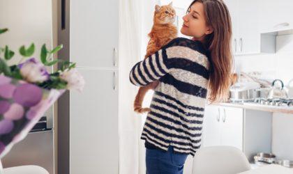 casa con gato