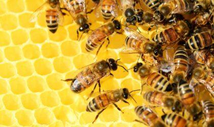 ¿Cómo puedes ayudar a las abejas desde tu casa?