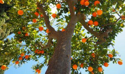 7 especies de árboles que puedes plantar en un jardín Mediterráneo