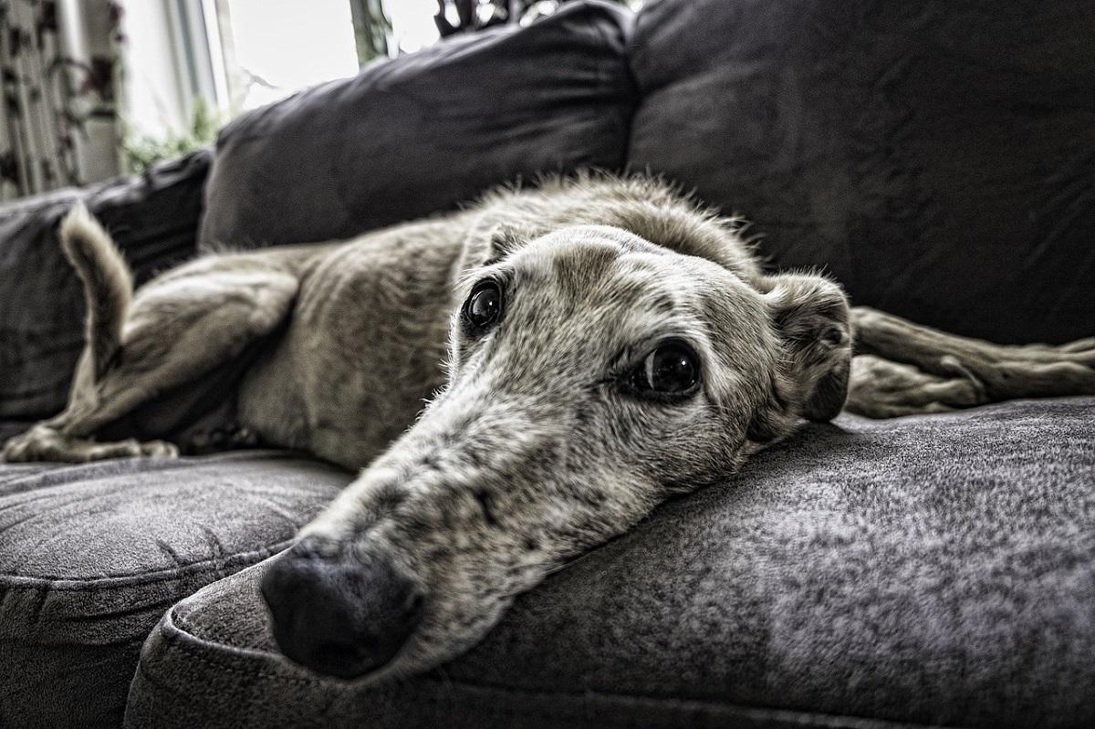 ¿Cómo se puede educar a un perro para convivir en el hogar?